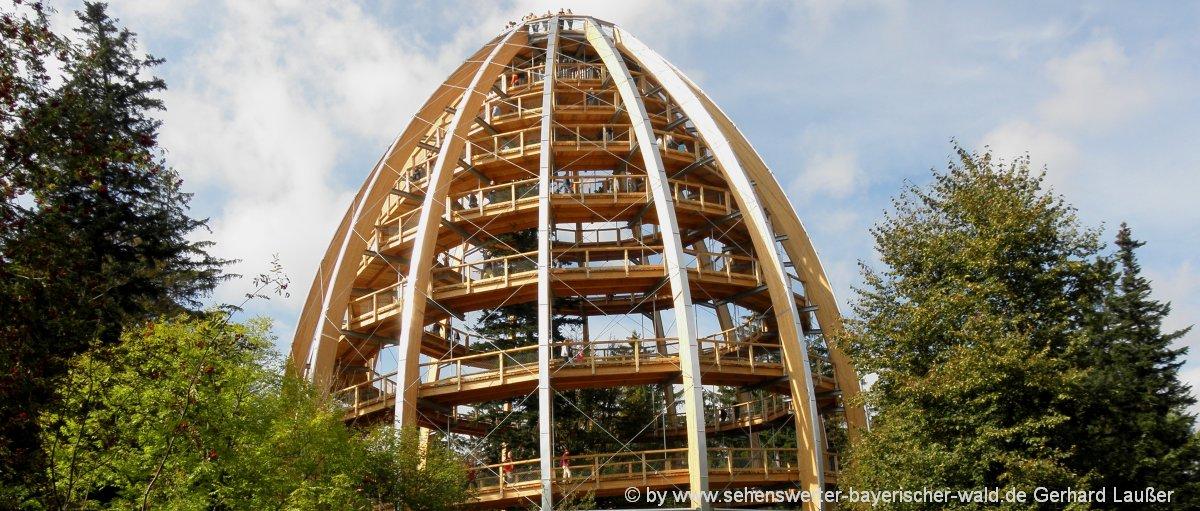 ausflugsziele-nationalpark-bayerischer-wald-baumwipfelpfad-neuschoenau